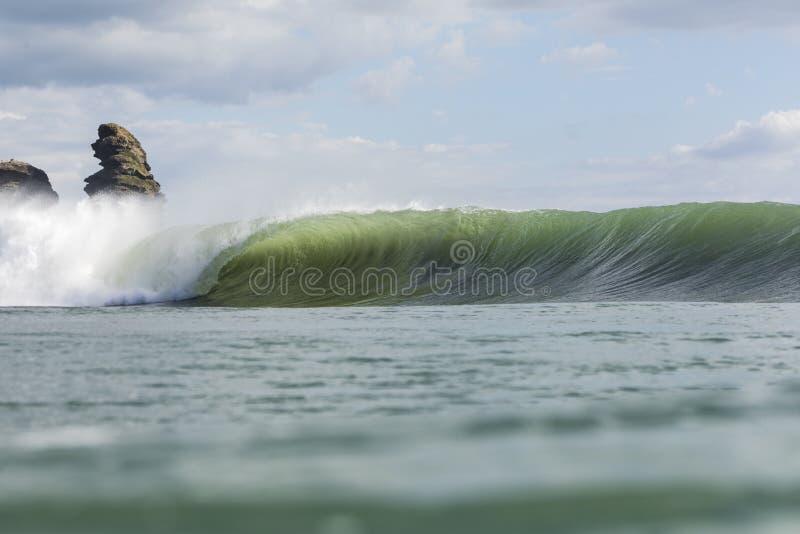 Surf`s Up Piha stock image