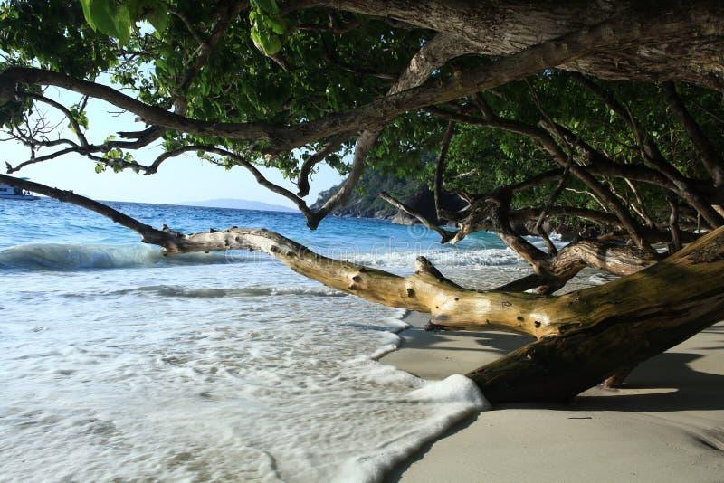 Surf on a sandy beach. Paradise island royalty free stock photos