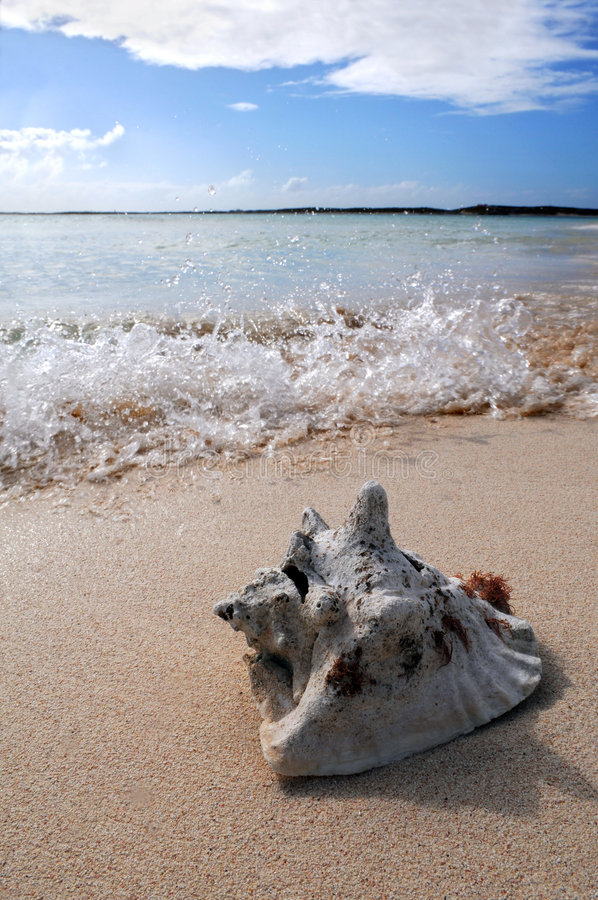 Free Surf Splashing On Sand With Sea Shell Stock Photos - 9089403
