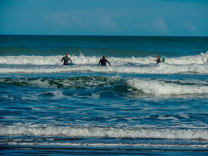 Surfa på Maukatia Maori Bay och den Muriwai stranden, Auckland, Nya Zeeland royaltyfri fotografi