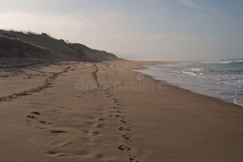Surfa stranden i skymning royaltyfri fotografi