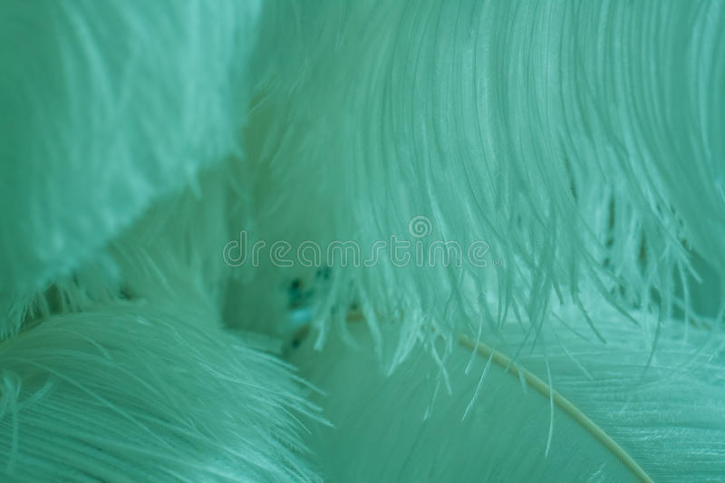 Surface covered with the Blue mint feathers as a background texture composition. Abstract Blue mint feather texture. Background and texture royalty free stock image