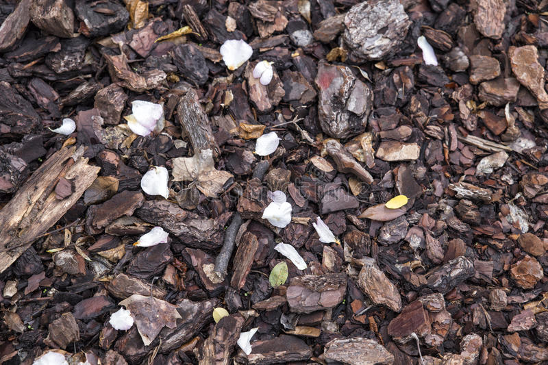 Surface covered with wood chipps and petals. Ornamental surface covered with wood chippings and petals stock photography