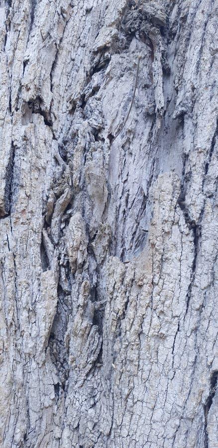 Surface d'un vieil arbre d'eucalyptus image stock