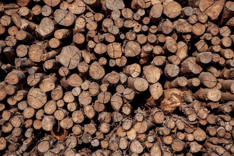 Surface de coupe de bois de palétuvier dans l'industrie Thaïlande de charbon de bois images libres de droits