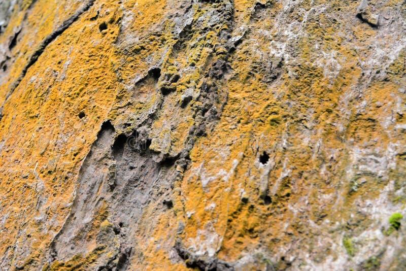 Surface de Dipterocarpus image libre de droits