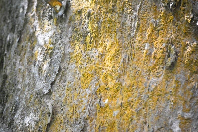 Surface de Dipterocarpus photo libre de droits