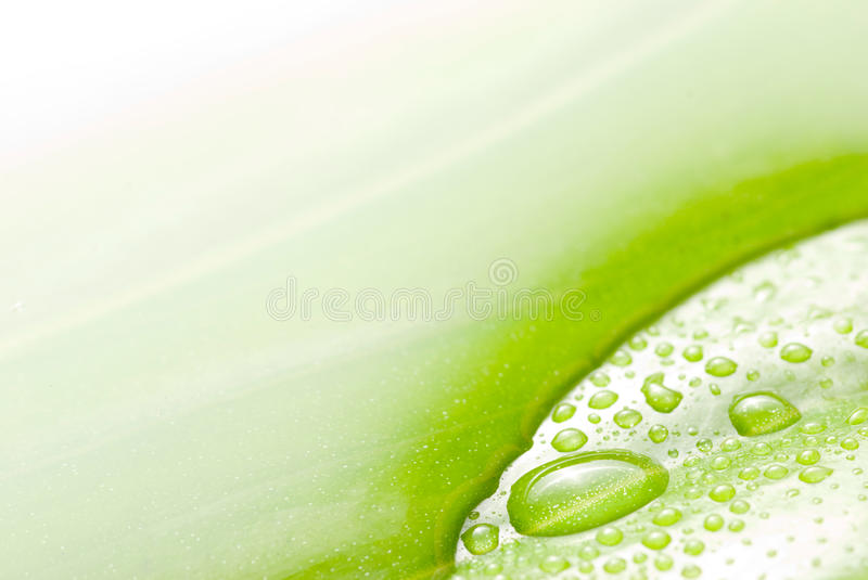 Surface de l'eau et lame verte photo stock