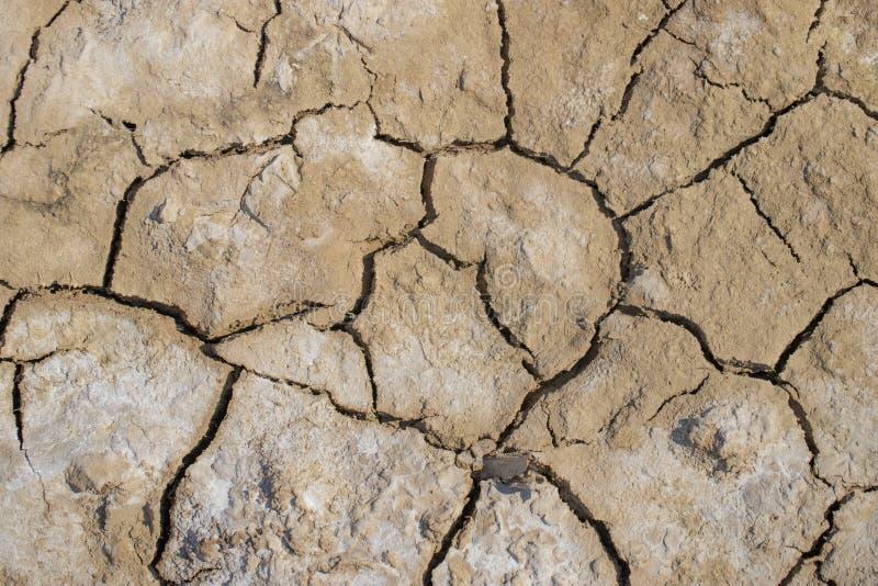 Surface de la terre sèche couverte du sel photo stock