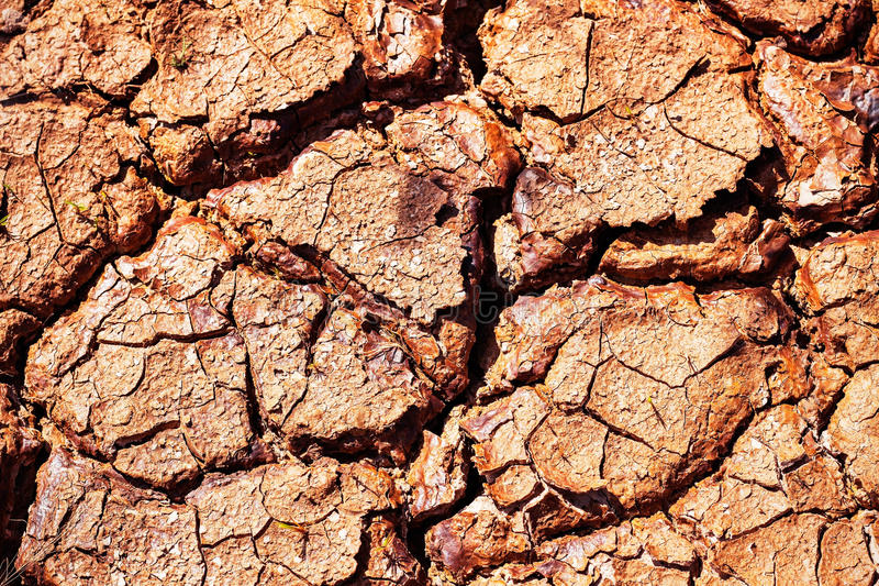 Surface of dry soil in summer. stock images