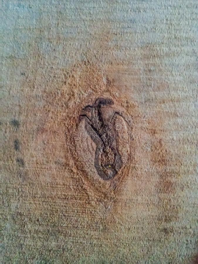 Surface en bois comme fond photos libres de droits