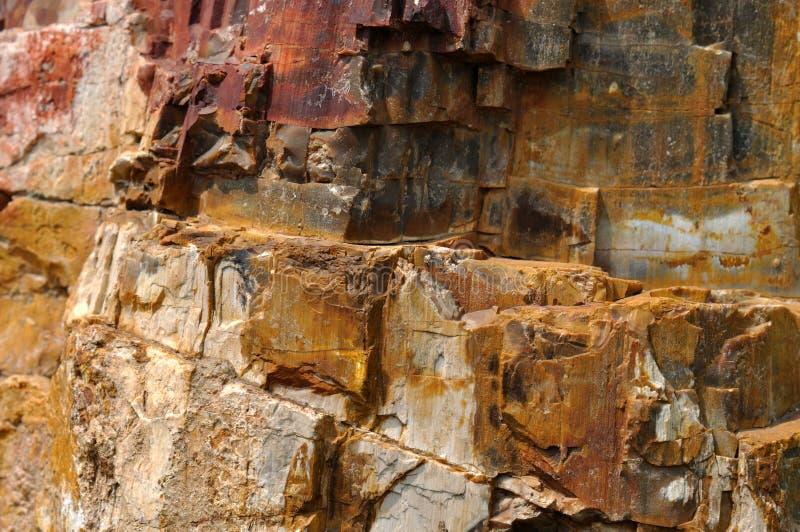 Surface en bois fossile
