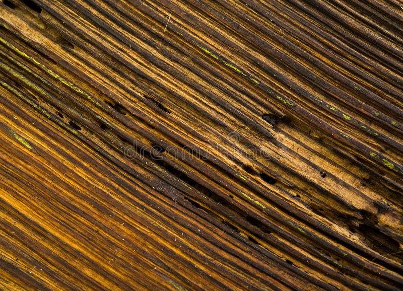 Surface. Fractured surface of an old oak boards treated copy the varnish royalty free stock image