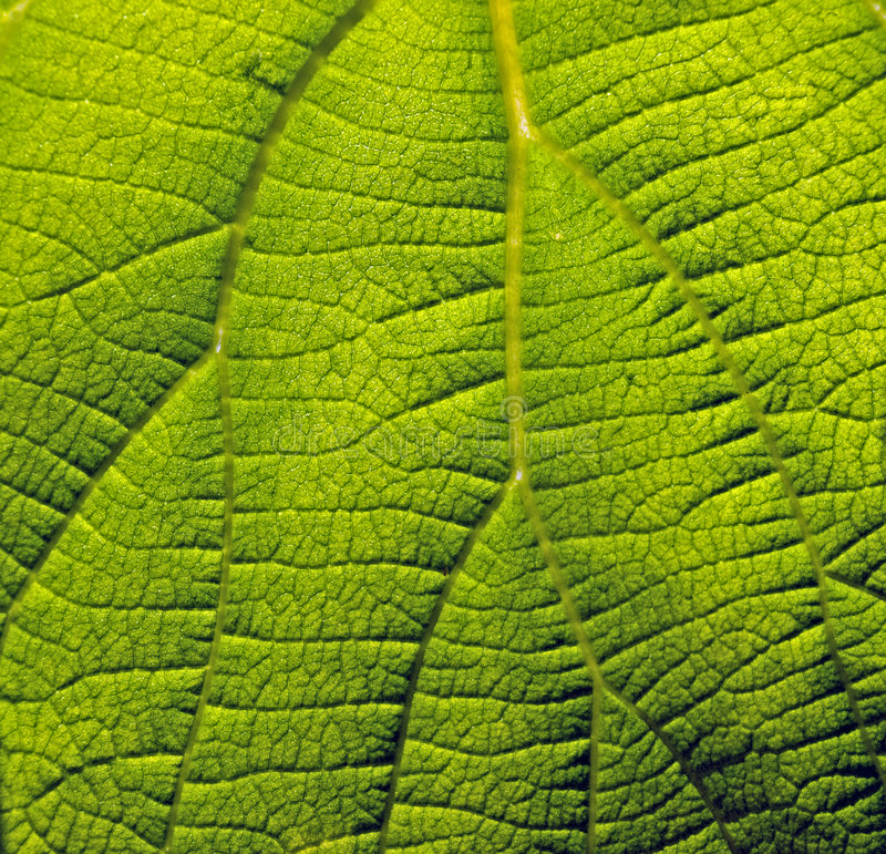 Download Surface of green plant stock image. Image of leaf, surface - 5122281