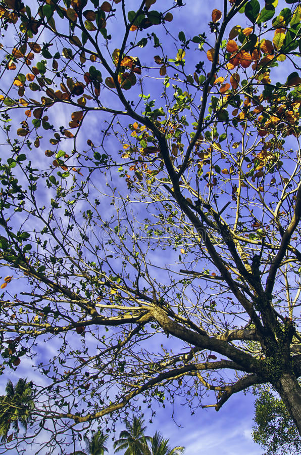 Surface level shot, tree over blue sky background at sunny day. Selective focus stock images