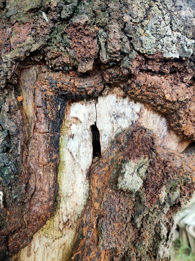 The surface of an old tree is corroded. Nature, natural, desktop, brown royalty free stock images
