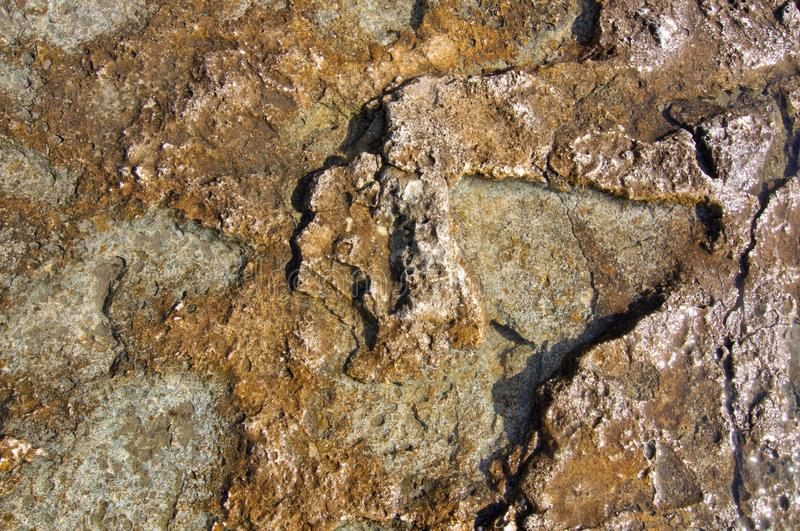 Structure of coastal sea stone. Surface of sea stone, structure, texture. Background royalty free stock photo