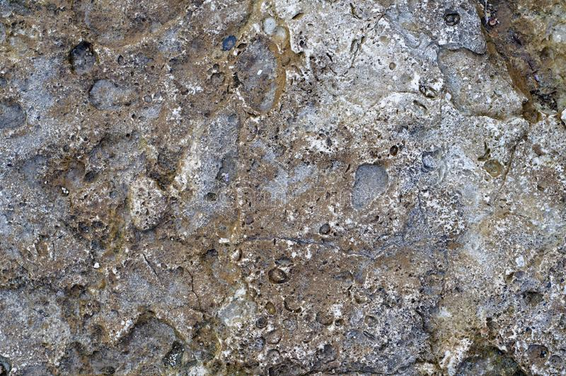 Structure of coastal sea stone. Surface of sea stone, structure, texture. Background royalty free stock photography