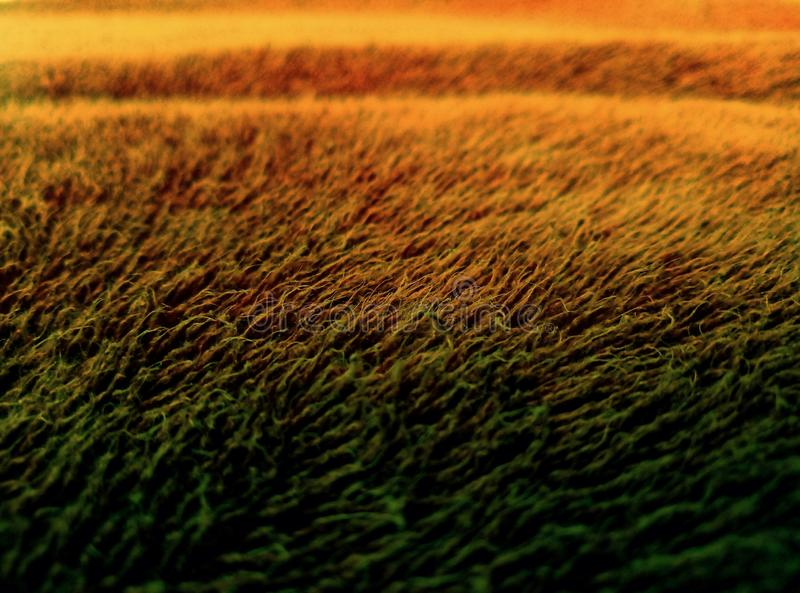 The surface texture of the towel cloth is like a farm.  Creative concept. Absorb, beauty, day, element, grass, field, illustration, orange, color, yatn, yarn stock photography