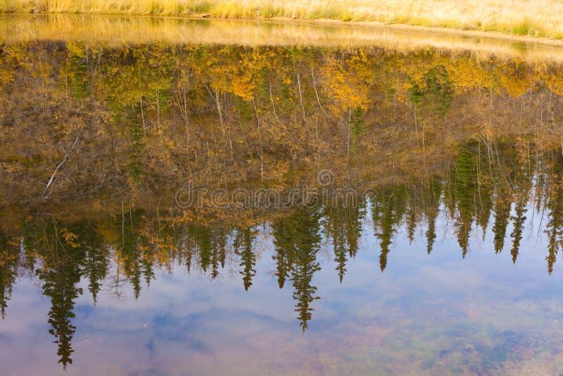 surface vatten för fallreflexioner fotografering för bildbyråer