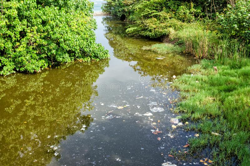 Surface of the water reservoir among trees is contaminated with debris and solid waste in form of stains. stock photo