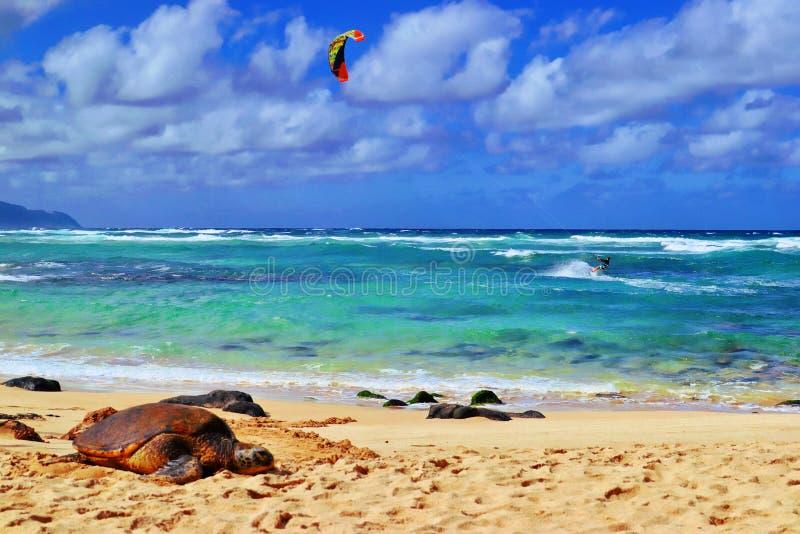 Surfar do papagaio imagem de stock royalty free