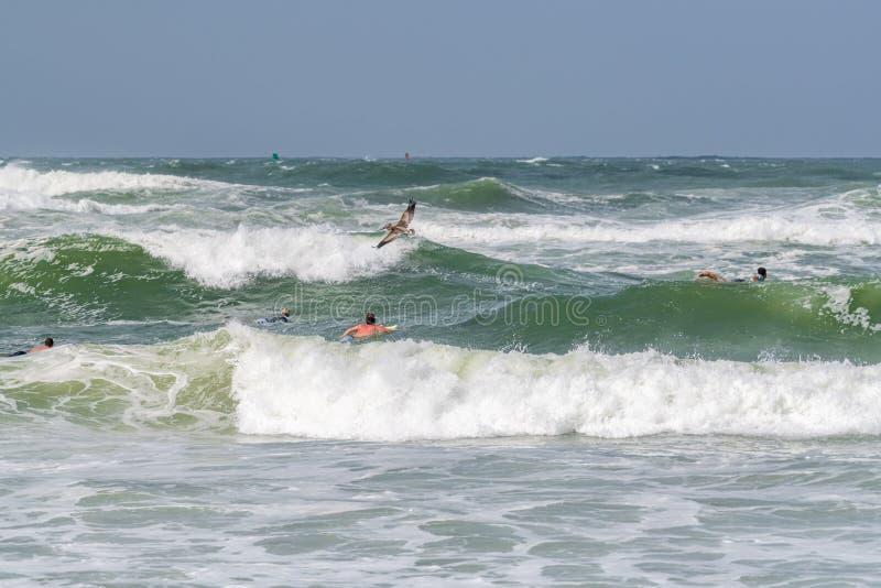 Surfare i golfen av Mexico arkivbild