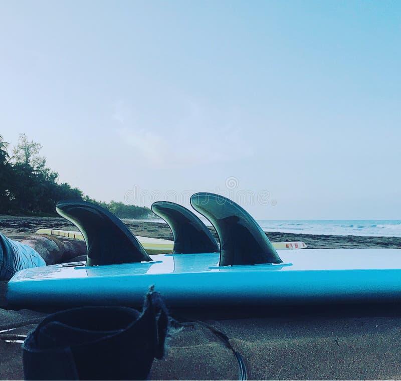 Surfboard foto de stock