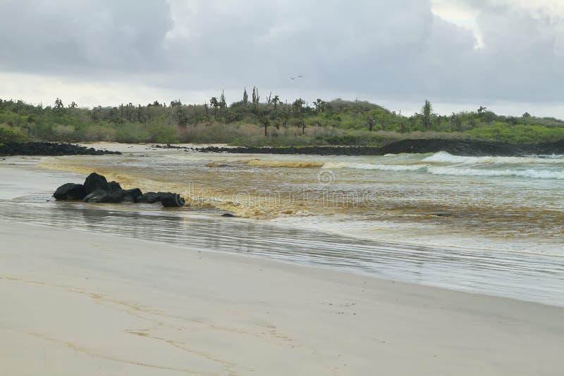 Surfender Strand von Tortuga-Bucht lizenzfreies stockfoto