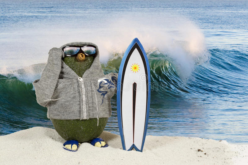 Surfer d'avocat photos libres de droits