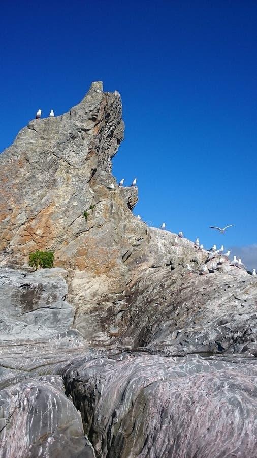 Download Surfer de plage photo stock. Image du plages, océan, surfer - 87707918