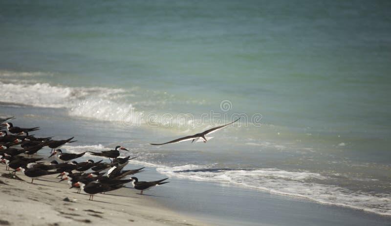 Surfer de vent images stock