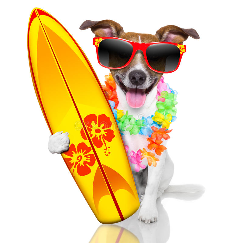 Surfer dog. Silly funny surfer dog with fancy surf board and flower chain