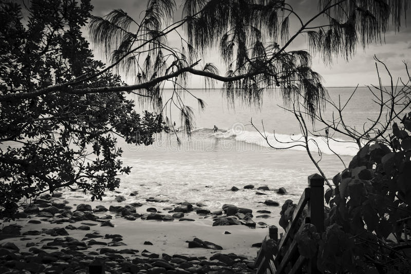 Surfer en parc national de Noosa images stock