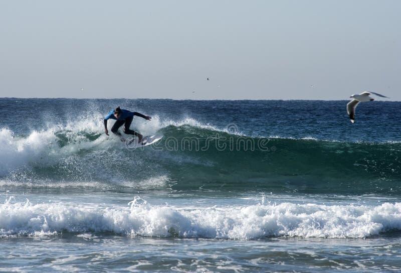 Surfer et mouettes photos libres de droits