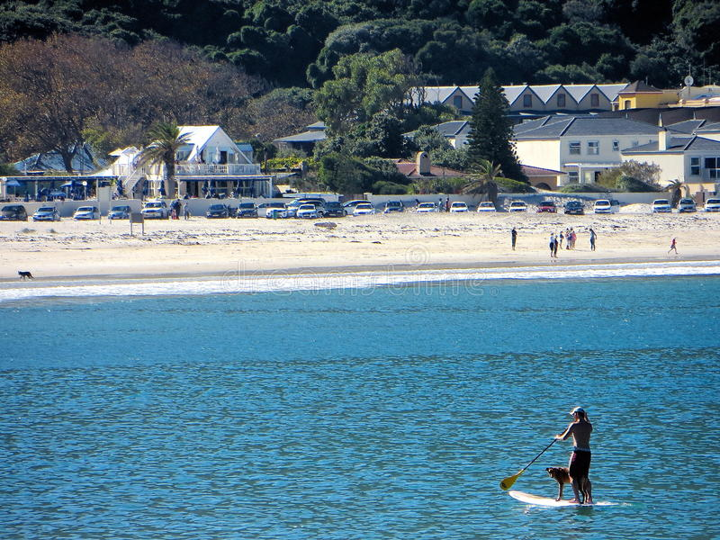 Hout Bay Surfing Dog royalty free stock photo