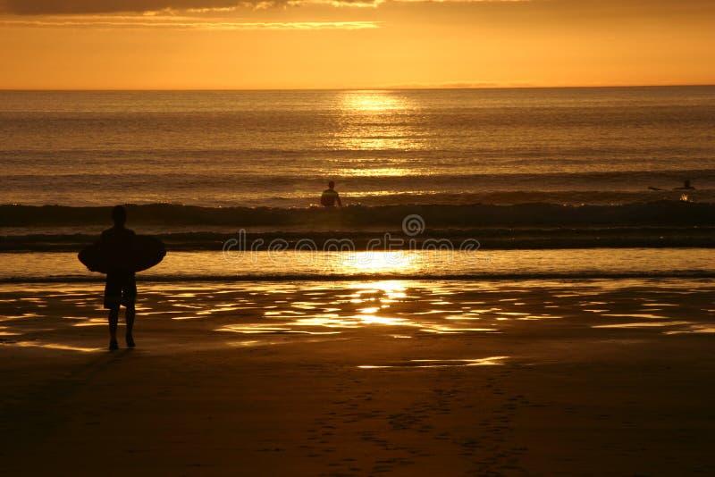 Surfer @ sunset royalty free stock photo