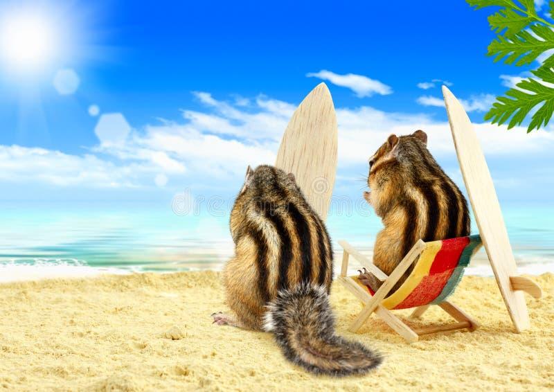 Surfers de Chipmunks sur la plage avec des panneaux de vague déferlante photographie stock libre de droits