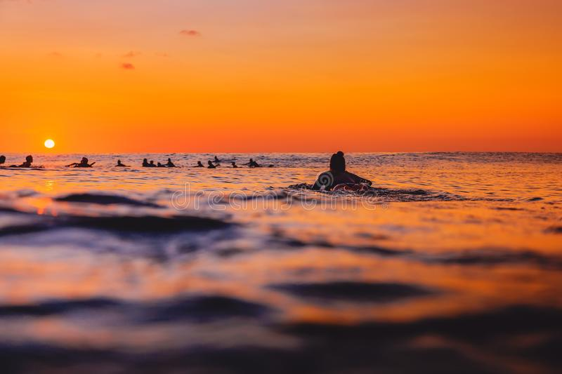 Surfers on line up and surfer woman at warm sunset. Surfing in ocean royalty free stock image