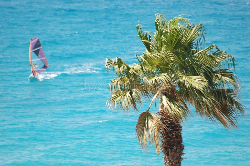 surfing royaltyfria foton
