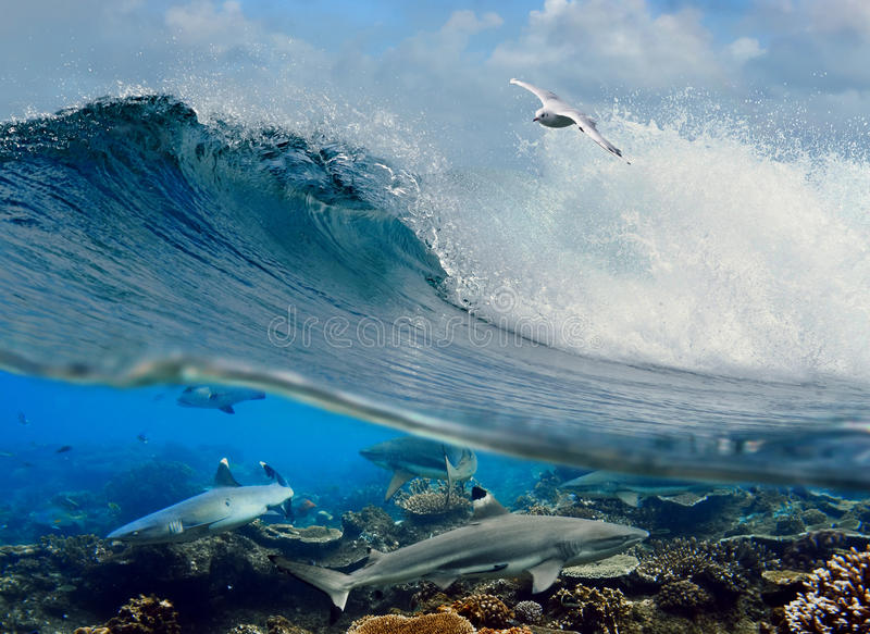 Surfing Wave Seagull Coral Reef Sharks Underwater Royalty Free Stock Images