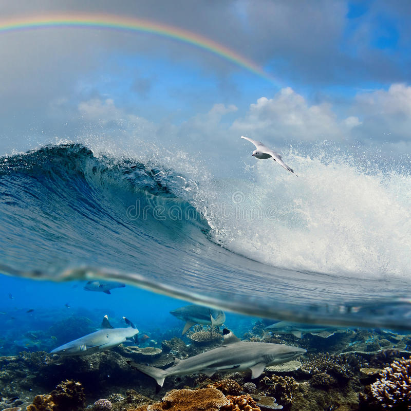 Surfing wave seagull coral reef sharks underwater royalty free stock photos