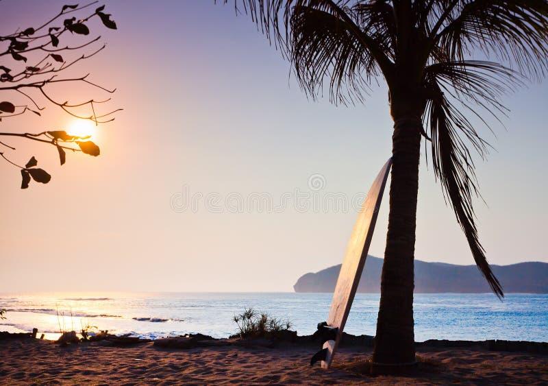 Surfingbräda på gömma i handflatan royaltyfri foto
