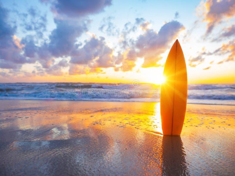 Surfingbräda på stranden på solnedgången arkivbild