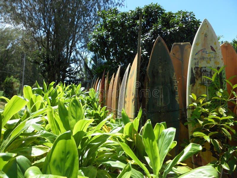 Surfingbrädastaket fotografering för bildbyråer