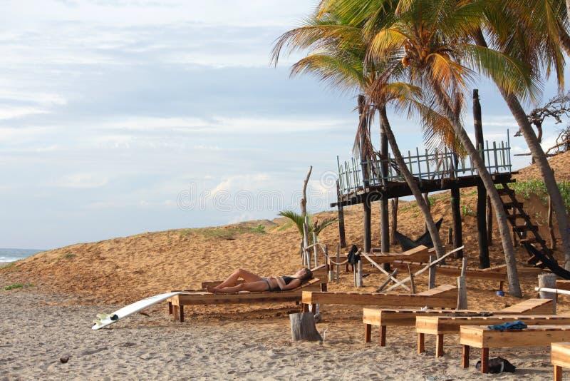 Surfingowiec dziewczyna odpoczywa na słońca lounger przegapia ocean podczas wschodu słońca pod drzewkami palmowymi zdjęcia royalty free