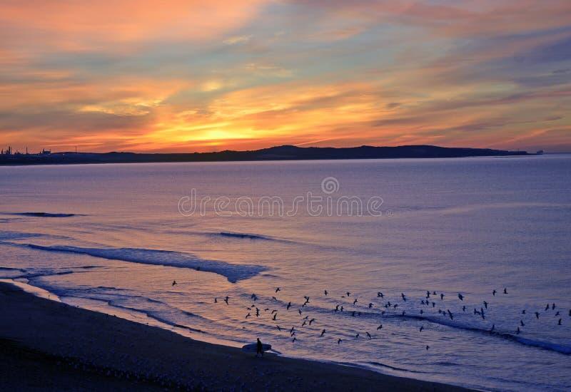Surfingowiec i ptaki na plaży przy wschodem słońca zdjęcia stock