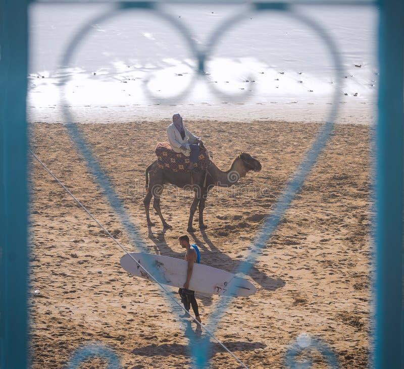 Surfingowiec i wielbłąd, Taghazout kipieli wioska, Agadir, Morocco 2 fotografia royalty free