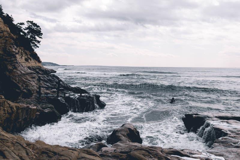 Surfingowiec paddles out w Kamakura, Japonia zdjęcia royalty free