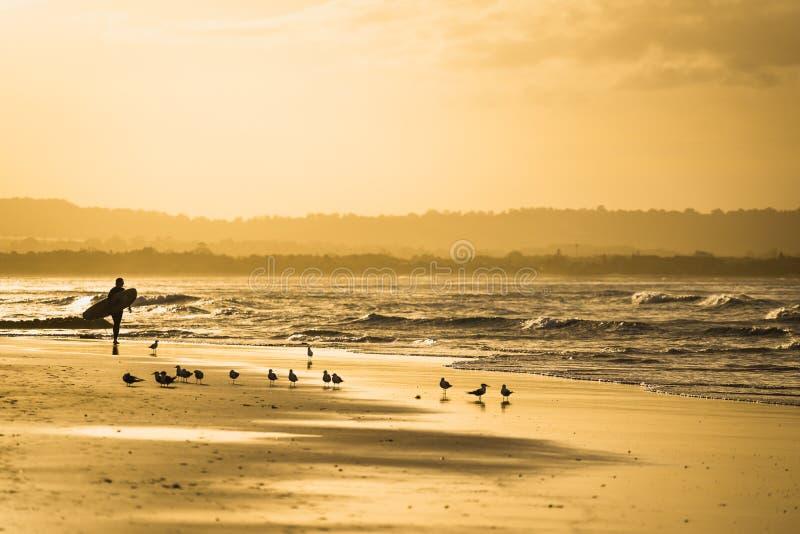Surfista a Byron Bay fotografia stock libera da diritti